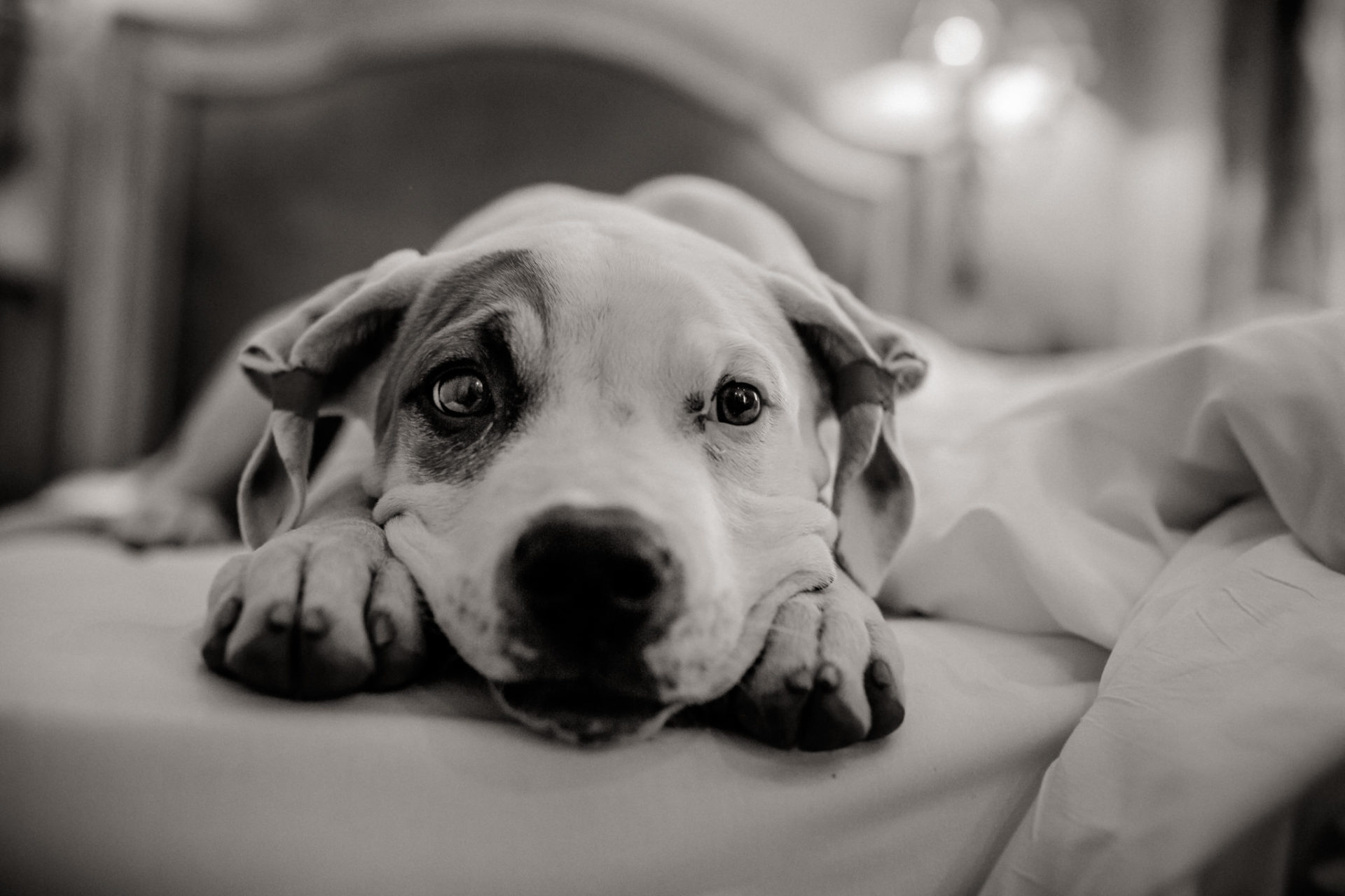 dog photographer stuttgart-pets portraits-natural animal photos-travel with dogs-france-alsace-hotel