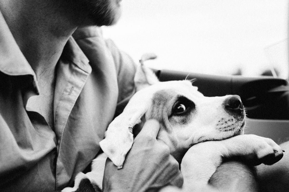dog photographer stuttgart-pets portraits-natural animal photos-porsche 911 dog-cute puppy