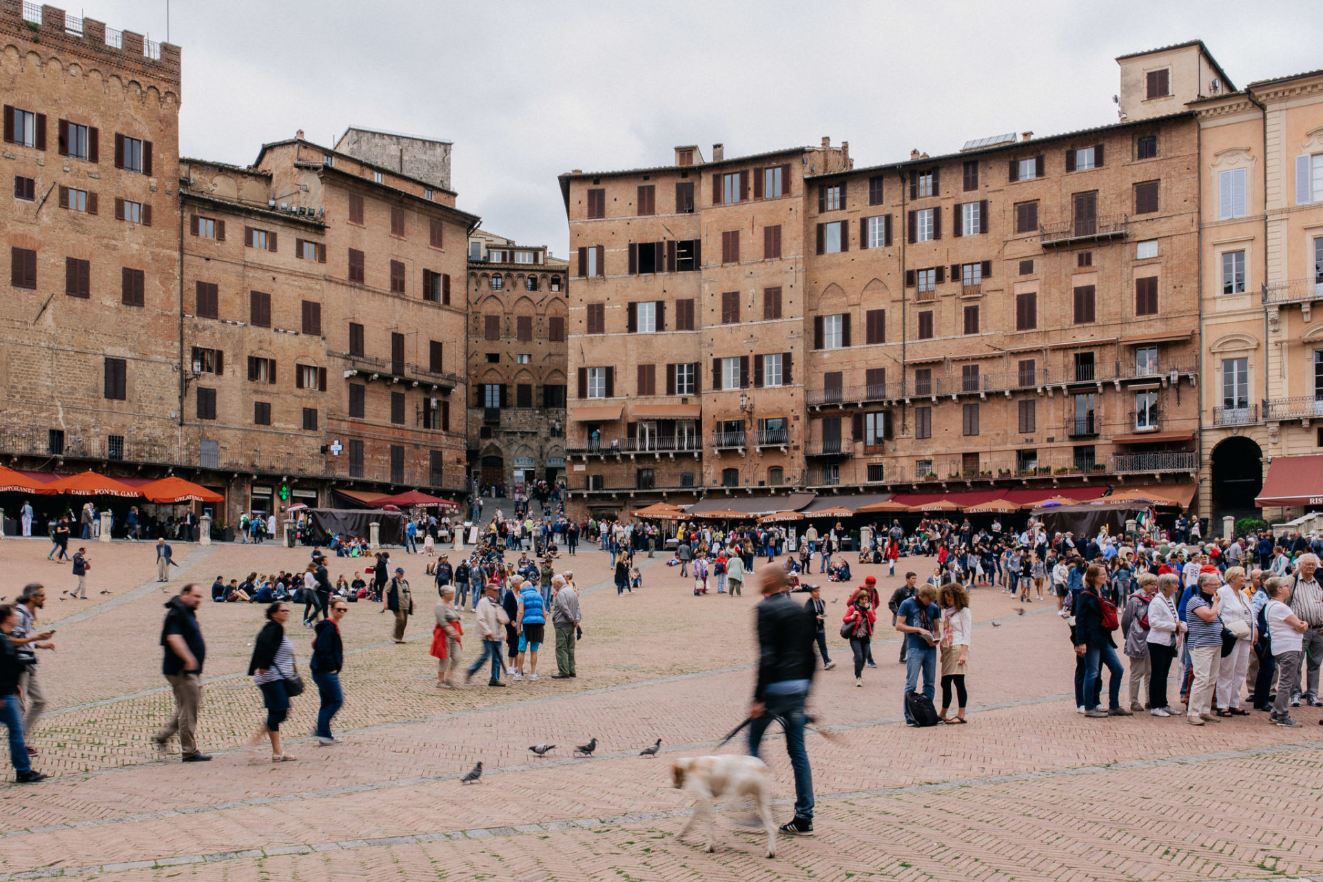 wedding photographer tuscany-italy road trip with dog-sienna town
