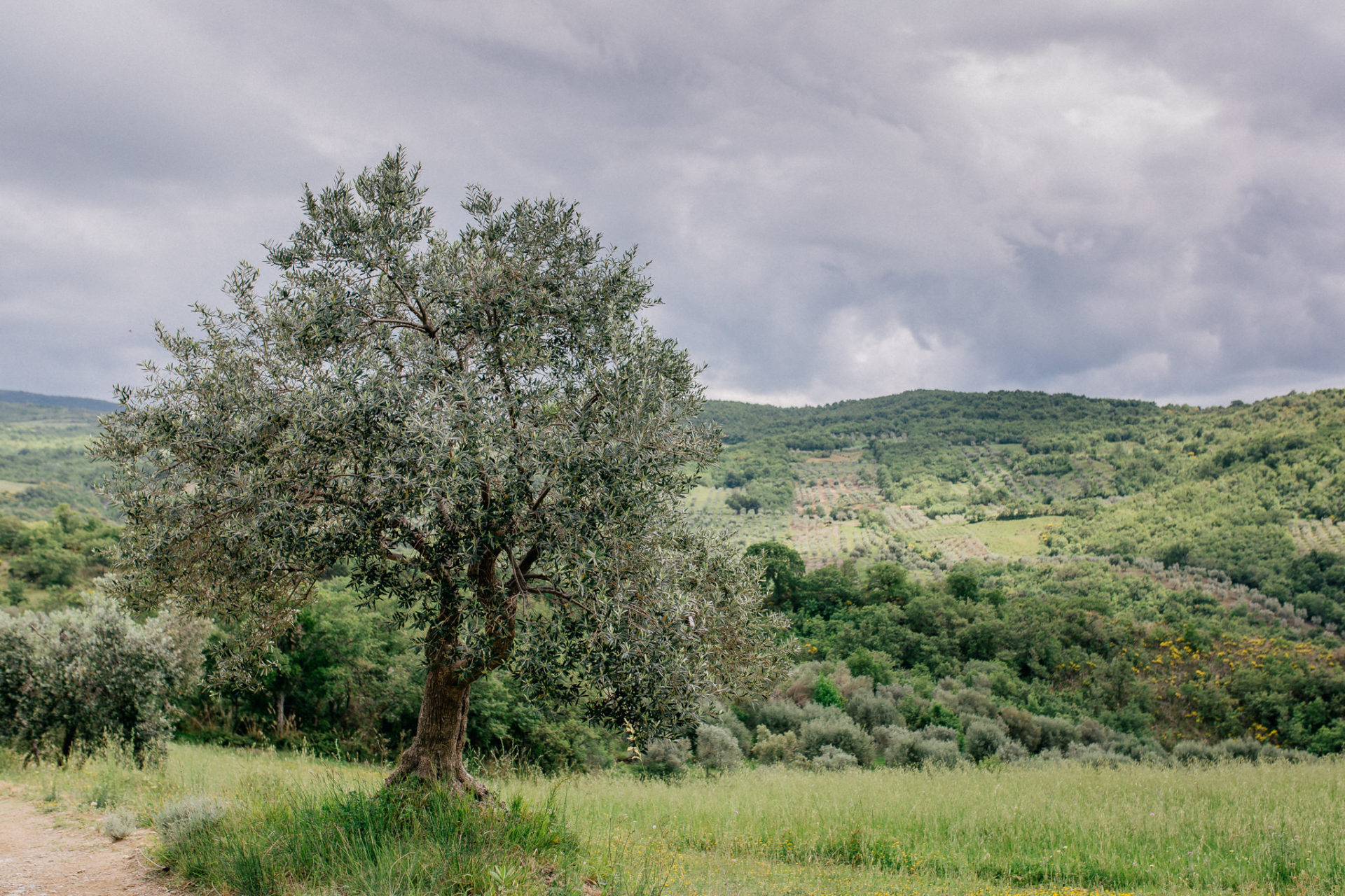 wedding photographer tuscany-italy road trip with dog-boutique hotel-exclusive romantic gateway-grosseto region-olive trees