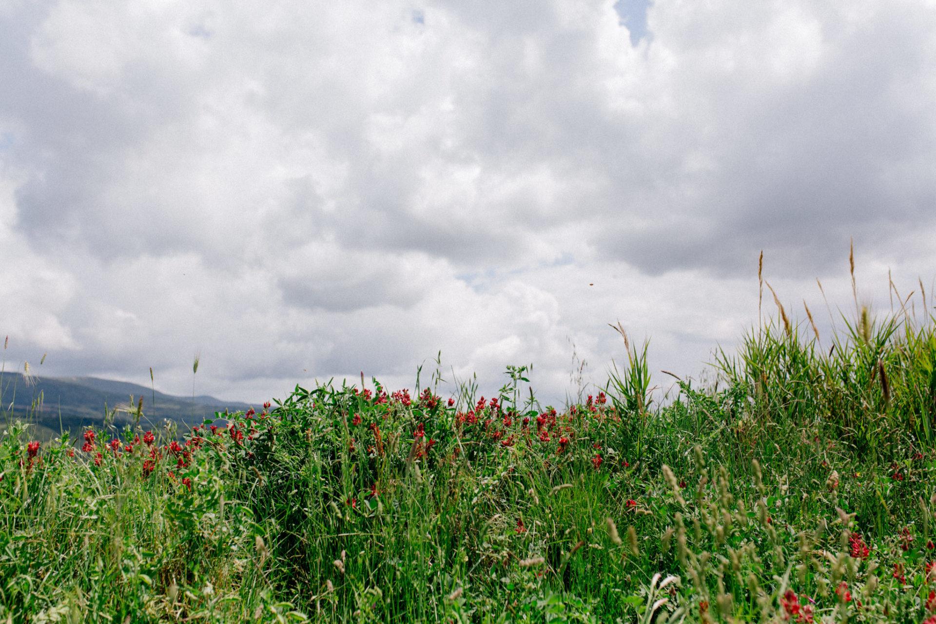 wedding photographer tuscany-italy road trip with dog-wild flowers-grosseto region