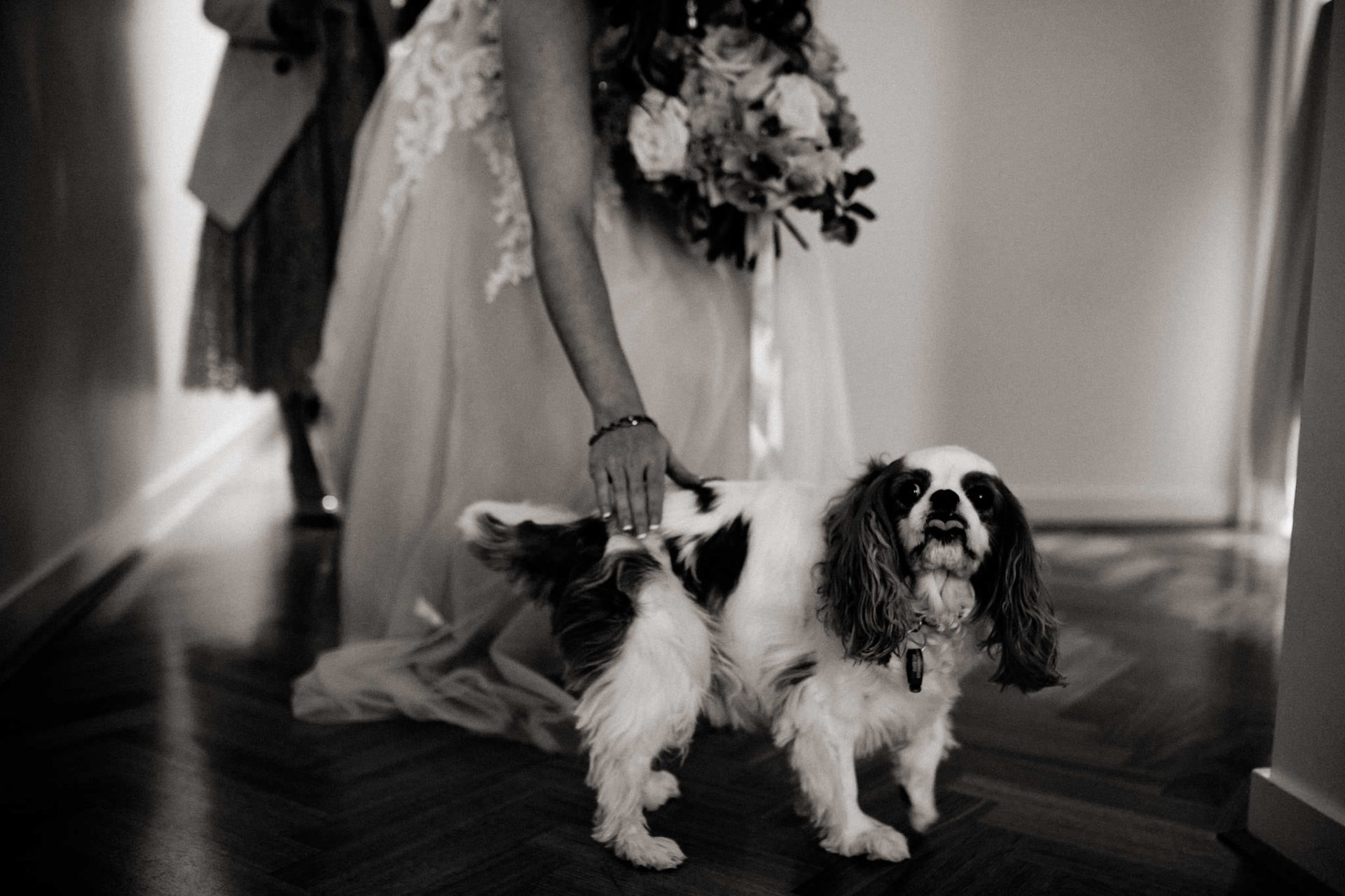 wedding with dogs-dog friendly marriage celebrant Melbourne-Georgia Mills-wedding ceremony-reception wedding venue noisy rituals-urban winery